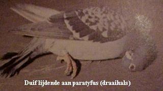 Paratyfus